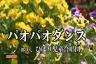 パオパオダンス (テレビ放送バージョン)