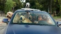 ラブ・ザ・ドッグ 犬依存症の女 動画