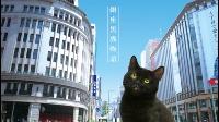 銀座黒猫物語 動画